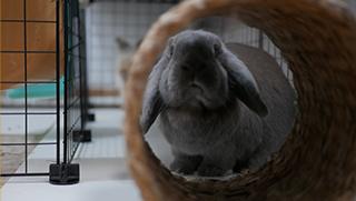 Lista de protectoras y refugios de conejos