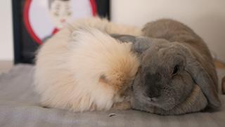 Adopción y rescate de conejos