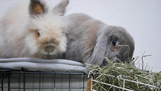 La alimentación de los conejos