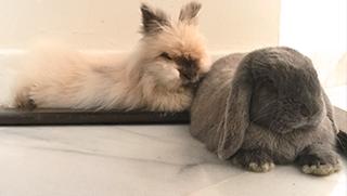 Lista de guarderias para conejos