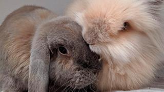 El lenguaje de los conejos