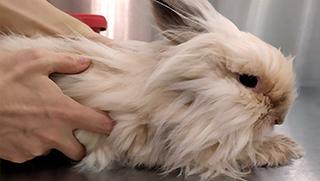 Lista de veterinarios éxoticos en España y Latinoamerica